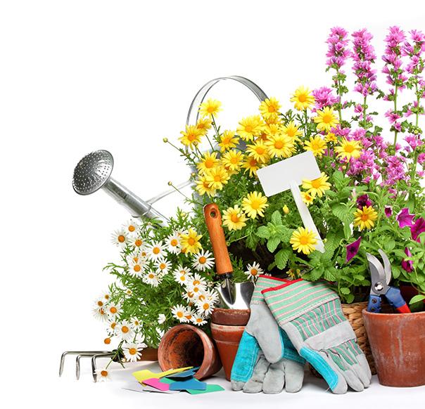 Local Gardener